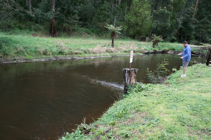Fly fishing alpine trout farm noojee for Trout farm fishing